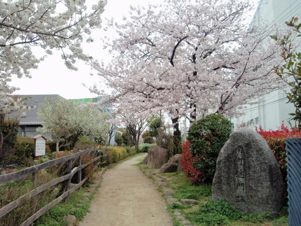 新豊島川 桜 (1)